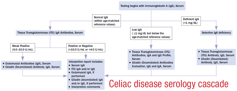 Celiac disease serology cascade