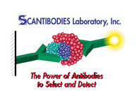 Scantibodies