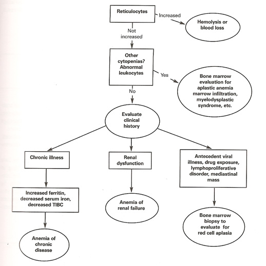 Figure: Diagnostic Algorithm for Normocytic Anemias